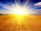Divine Seed