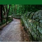 Prayer Journey: Days 21-40